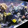 120 gallons reef tank (mostly live coral and fish) - Left Angle 120g Reef