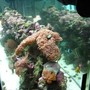 55 gallons reef tank (mostly live coral and fish) - The whole tank