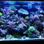 65 gallons reef tank (mostly live coral and fish) -