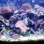 46 gallons reef tank (mostly live coral and fish) - 46 gallon bow front tank
