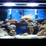 90 gallons reef tank (mostly live coral and fish) - 90 gallon