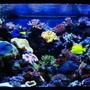 210 gallons reef tank (mostly live coral and fish) - 210 Gallon reef aquarium