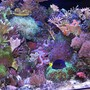 180 gallons reef tank (mostly live coral and fish) - right side of 180 pentagon