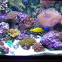 75 gallons reef tank (mostly live coral and fish) - pic of my 75 gallon tank