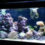 145 gallons reef tank (mostly live coral and fish) - Left view