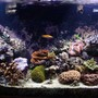 110 gallons reef tank (mostly live coral and fish) - Full Tank