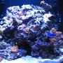 24 gallons reef tank (mostly live coral and fish) - 24 gallon reef