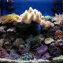 11 gallons reef tank (mostly live coral and fish) - Nano Reef