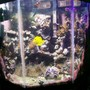 55 gallons reef tank (mostly live coral and fish) - my 55 gallon reef tank