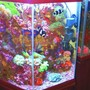 43 gallons reef tank (mostly live coral and fish) - Octagon - Vertical Reef