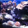 20 gallons reef tank (mostly live coral and fish) - Overall picture