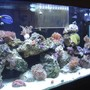 55 gallons reef tank (mostly live coral and fish) - FTS