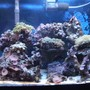 55 gallons reef tank (mostly live coral and fish) - The Setup...A Little Bit Of Everything