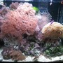 34 gallons reef tank (mostly live coral and fish) - Red Sea Max