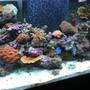 75 gallons reef tank (mostly live coral and fish) - new 75 gal tank
