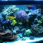 182 gallons reef tank (mostly live coral and fish) - tank