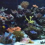 65 gallons reef tank (mostly live coral and fish) - 65 gallon mixed reef @ 1 year