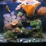 29 gallons reef tank (mostly live coral and fish) - 29 Bio Cube Reef