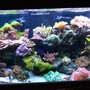 120 gallons reef tank (mostly live coral and fish) - 120g reef tank