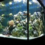 90 gallons reef tank (mostly live coral and fish) - 90 gallon square, 1.5 months old.