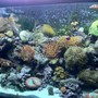 90 gallons reef tank (mostly live coral and fish) - 90 Gallon Reef Tank