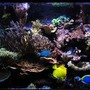 180 gallons reef tank (mostly live coral and fish) - Updated Photo 10-9-11