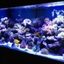 220 gallons reef tank (mostly live coral and fish) - My thing that gives me a quiet mind