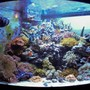 54 gallons reef tank (mostly live coral and fish) - No room!!!