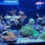20 gallons reef tank (mostly live coral and fish) - 20 gallon mixed reef.