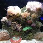 35 gallons reef tank (mostly live coral and fish) - rsm 130d