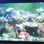 277 gallons reef tank (mostly live coral and fish) - My 125 reef display