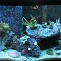 72 gallons reef tank (mostly live coral and fish) - -s0da-'s Tank 72 gn RR Bowfront, 20gn Sump, 4x96wt PC lights, 80lbs LR, 1650gph Closed loop system.