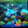 75 gallons reef tank (mostly live coral and fish) - 72 gallon Bowfront African cichlid tank.