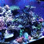 110 gallons reef tank (mostly live coral and fish) - Sps tank
