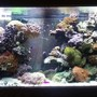90 gallons reef tank (mostly live coral and fish) - Main display
