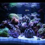 140 gallons reef tank (mostly live coral and fish) - 140 Gal. Mixed Reef