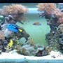180 gallons reef tank (mostly live coral and fish) - midday