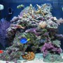 14 gallons reef tank (mostly live coral and fish) - Tank as of 1/30/07