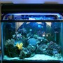 20 gallons reef tank (mostly live coral and fish) - 20g tank, with over 15 different corals.