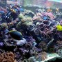 240 gallons reef tank (mostly live coral and fish) - my reef tank