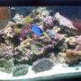 100 gallons reef tank (mostly live coral and fish) - my personal tank