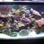 100 gallons reef tank (mostly live coral and fish) - home tank
