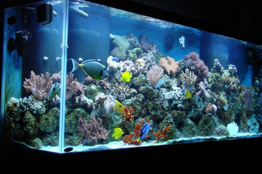 Nasobadtang 39 s reef tanks photo id 19081 full version for Saltwater fish for 10 gallon tank