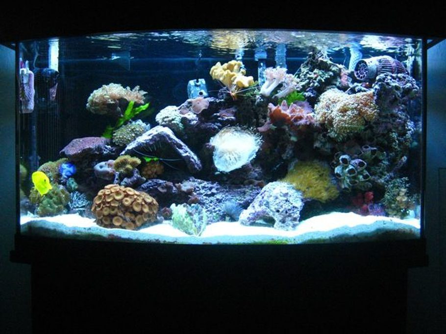 Updated picture of my 46 gallon bow front tank. Iu0027ve added new lighting & Saltydoggu0027s Reef Tanks Photo (ID 22854) - Full Version ...
