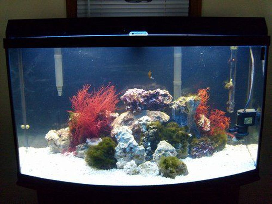 Parker cky1 39 s reef tanks photo id 24508 full version for 70 gallon fish tank