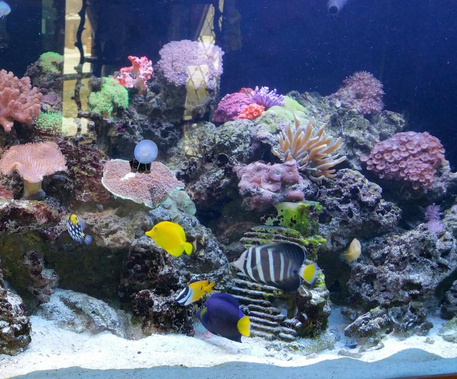 260 gallon reef tank with various fish
