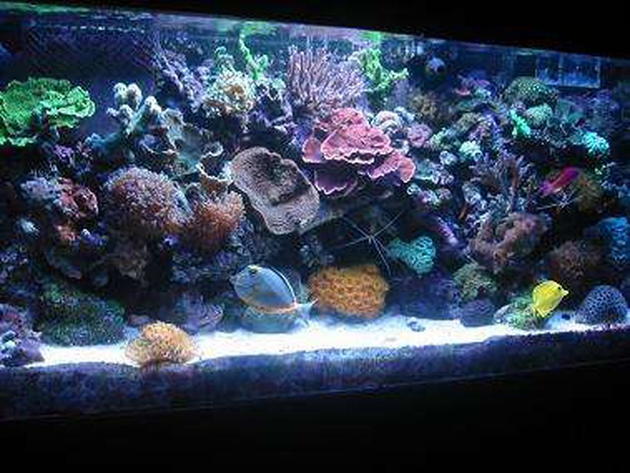 Most beautiful reef tanks 2006 for 55 gallon fish tank size