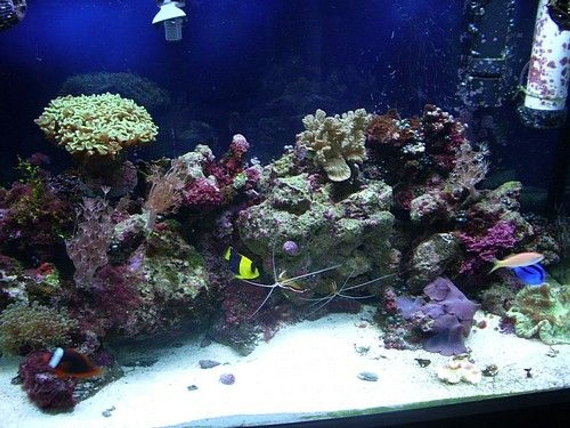 corals inverts stocking in 65 gallons tank - front close