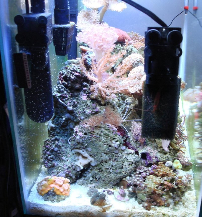 corals inverts stocking in 30 gallons tank - left side