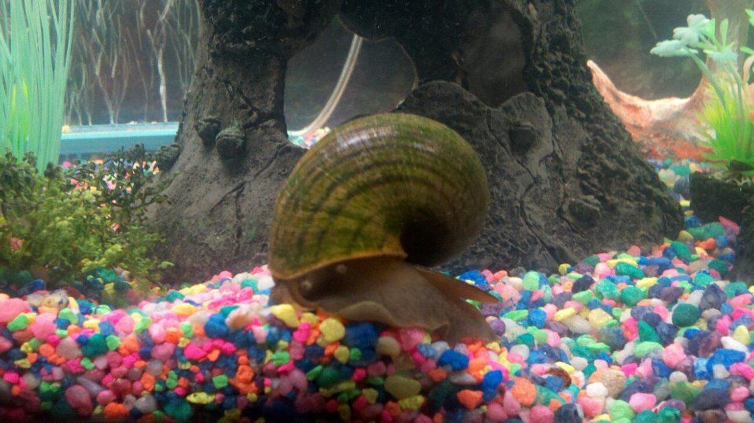 Spotlight On The Le Snail